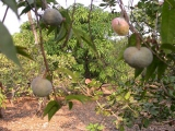 Local Name: Ramfoll